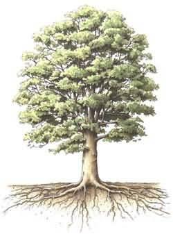 Resultado de imagen para árbol con raíces
